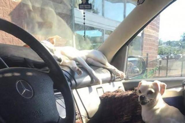 Une dame vivant dans son VUS Mercedes-Benz avec... (Photo : Police de New York)