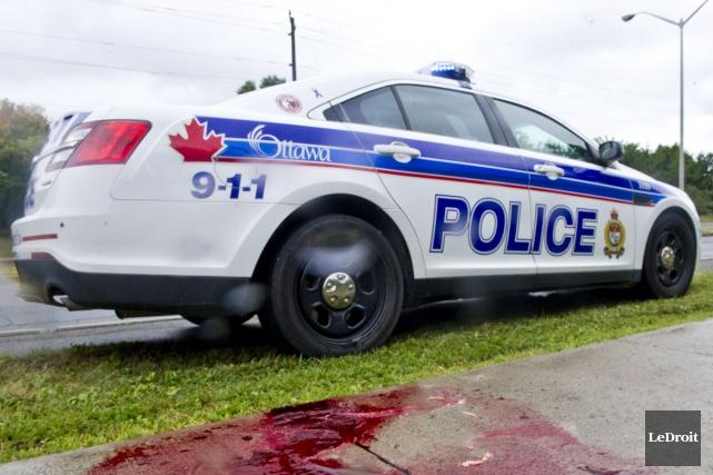 Un des chiens a été abattu sur le... (Martin Roy, LeDroit)