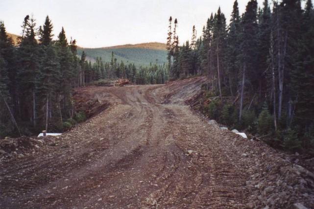 Ce qui devait être une simple escapade en forêt pour cueillir des bleuets s'est... (Photo archives)