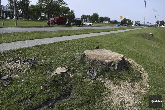 Plusieurs arbres ont été coupés.... (Photo Le Quotidien, Mariane L. St-Gelais)