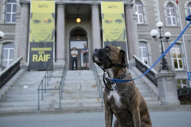 Cette photo des deux banderoles de Raif Badawi... (Spectre Média, René Marquis)