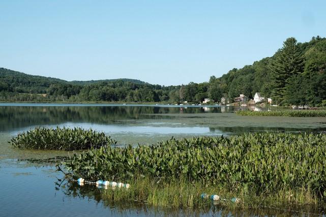 Pour lutter contre les algues bleu-vert qui prolifèrent...