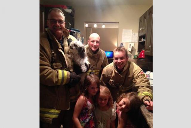 Les pompiers d'Ottawa ont secouru la chienne Luna,... (Courtoisie, services des incendies d'Ottawa)