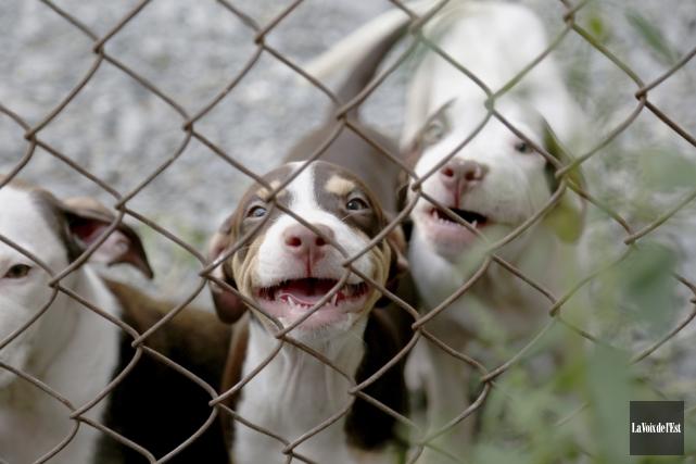 Onze chiens, dont sept bébés, ont été saisis... (Julie Catudal, La Voix de l'Est)