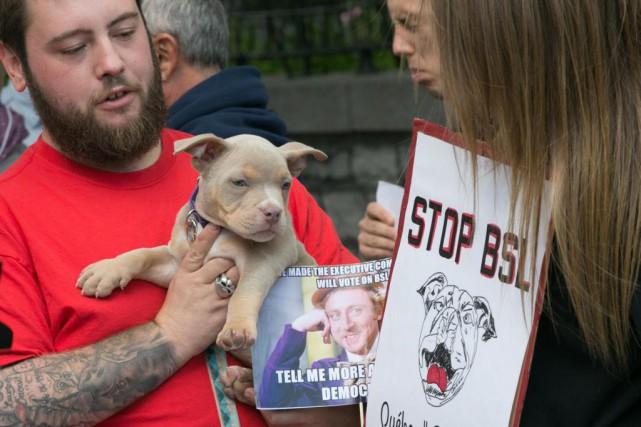 Propriétaires et défenseurs de pitbulls ont manifesté hier... (Photo Martin Tremblay, La Presse)