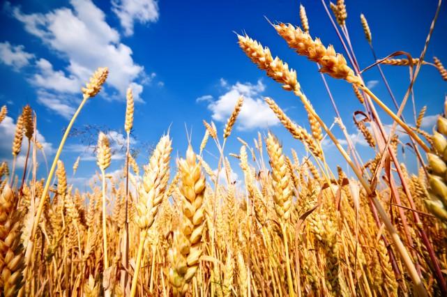 Depuis nombre d'années, on cultive de moins en moins bio, de plus en plus... (123RF)