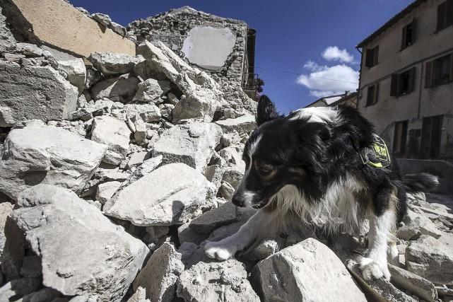 Un chien renifleur cherche des survivants du séime... (AP)