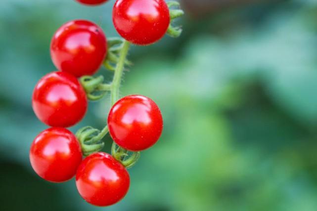 La police de Toronto enquête sur un vol de tomates pour le moins inusité. (Photo Thinkstock)