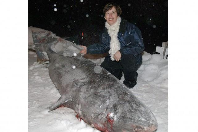 On se souviendra de ce requin du Groenland,... (Archives Le Progrès-Dimanche, Jeannot Lévesque)
