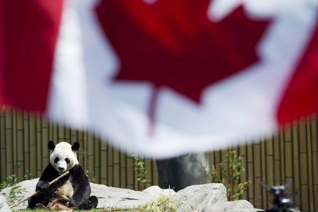 Da Mao sera transféré de Toronto à Calgary... (Photo La Presse Canadienne)