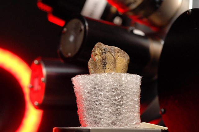En étudiant le fossile et les numérisations 3D,... (photo Marsha Miller/Université du Texas)
