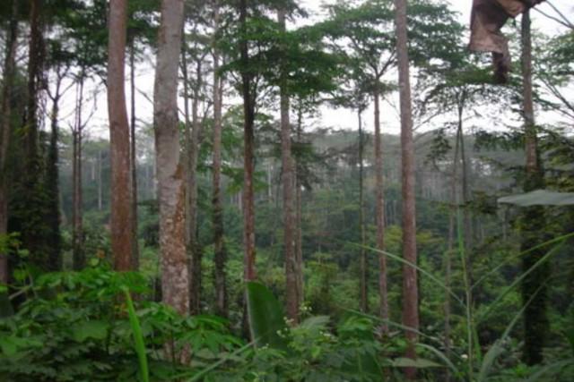 La réserve de la biosphère de Luki, en... (UNESCO.org)