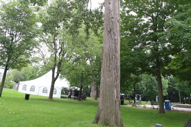 Voisin de l'arbre qui a chuté sur le... (Janick Marois)