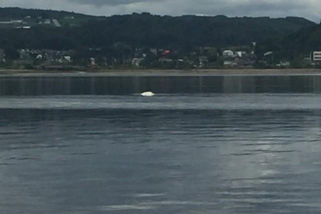 Mélanie Davis-Lavoie, de Pêche Aventures Saguenay, a vu... (Photo courtoisie, Mélanie Davis-Lavoie)