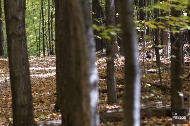 Une femme qui faisait du jogging vendredi après-midi dans le Parc national du... (PHOTO ARCHIVES LA PRESSE)