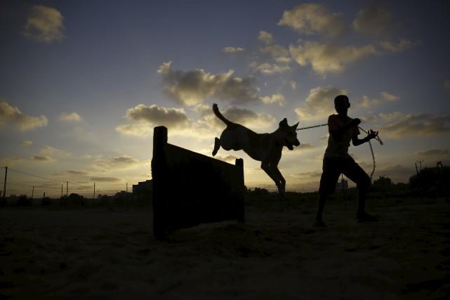 Les chiens sont considérés comme des animaux impurs... (AFP, Mohammed Abed)