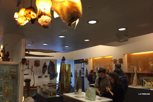 Le Musée phallologique d'Islande comporte plus de 200... (La Tribune, Jonathan Custeau)