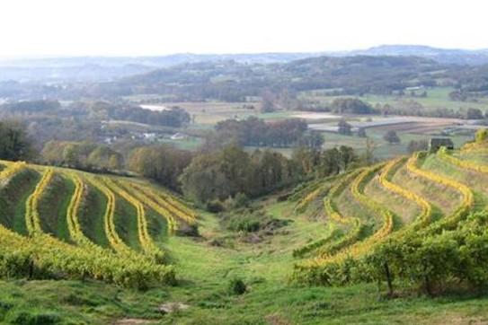 Le vignoble corrézien, qui couvre quelques dizaines d'hectares de vigne,...