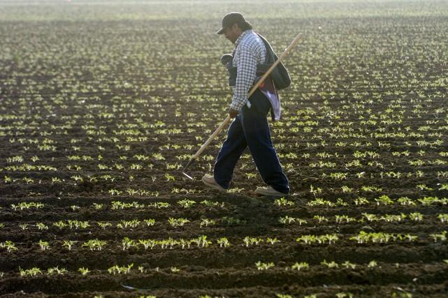 Alors que de nombreux producteurs agricoles doivent faire... (Archives, La Presse)