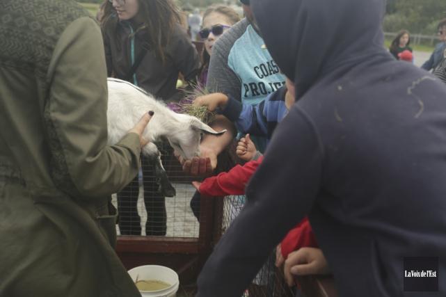 Les enfants ont pu avoir toucher plusieurs animaux... (Catherine Trudeau, La Voix de l'Est)