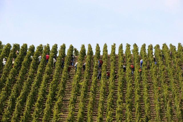 Un vignoble à Ampuis dans la vallée du... (PHOTO ARCHIVES AFP)