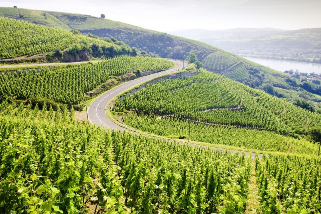 La vallée du Rhône... (PHOTO THINKSTOCK)