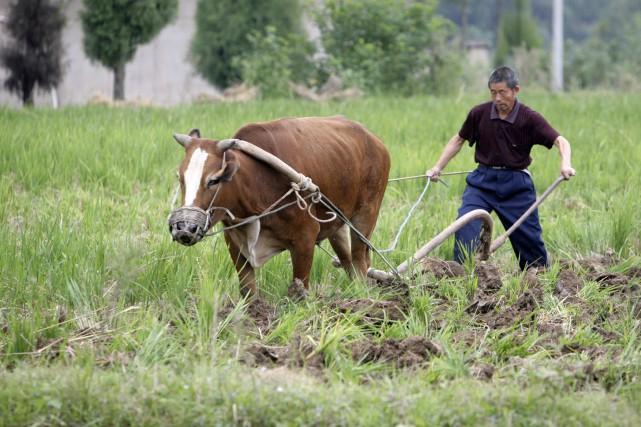 Quelque 70 millions de Chinois vivaient sous le... (PHOTO REUTERS)