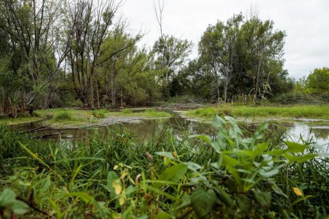 Le marais situé tout près de l'Éco-Campus Hubert-Reeves... (Photo Hugo-Sébastien Aubert, La Presse)