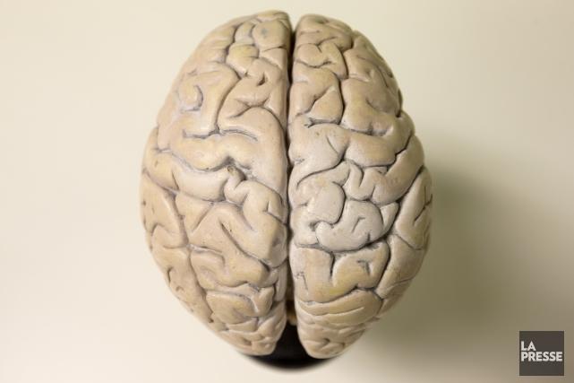 C'est dès l'âge de 13ans que la partie du cerveau humain sollicitée pour... (PHOTO ALAIN ROBERGE, ARCHIVES LA PRESSE)