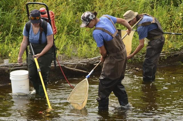 L'équipe de Renaissance lac Brome a procédé à... (fournie par Renaissance lac Brome)