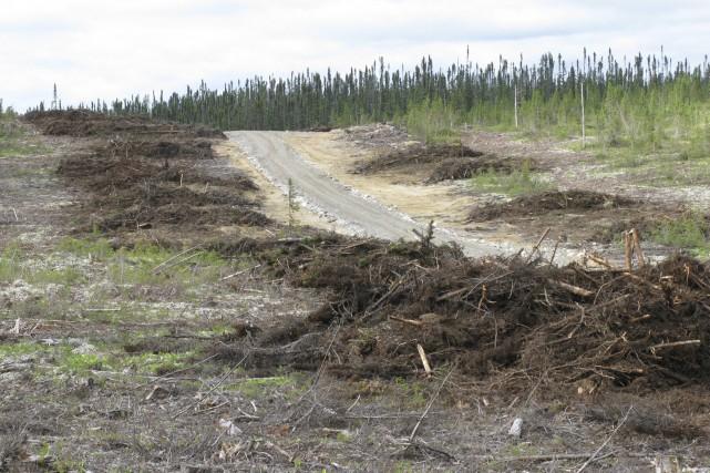 Bien que l'utilisation de résidus forestiers pour produire... (Photo courtoisie)