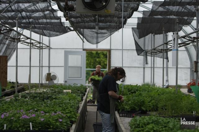 Les exportations horticoles québécoises ont crû de22,9% en... (archives La Presse)