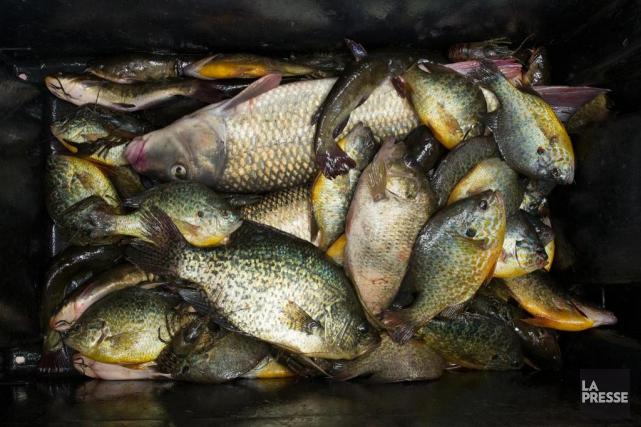 Quelque 59espèces de poissons sont présentes dans le... (PHOTO ROBERT SKINNER, LA PRESSE)