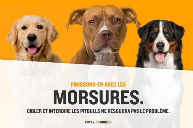 L'Association québécoise des SPA et SPCA lance une... (Image tirée du site www.finissons-en.ca)