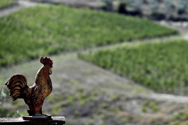 Aujourd'hui, la région de 70000 hectares produit 35... (AFP, Tiziana Fabi)