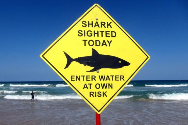 Un surfeur de 17 ans a été blessé à la hanche lundi matin par un requin sur la... (ARCHIVES REUTERS)