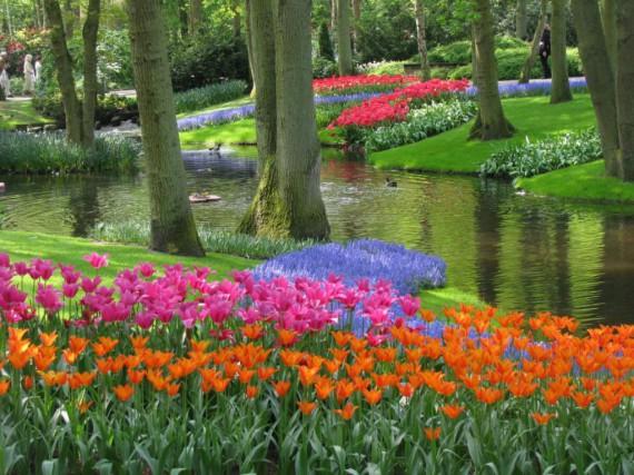 Des tulipes pour tous les printemps pierre gingras for Tous pour le jardin