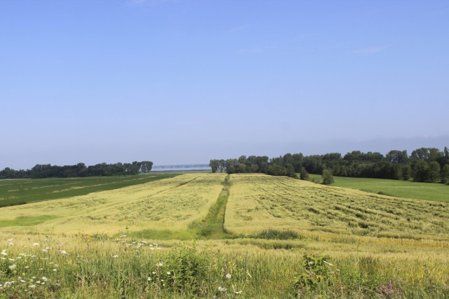 Bayer devient la plus grande entreprise de semences... (123RF)
