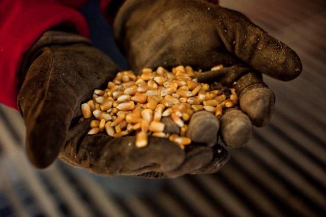 Une étude commandée par Santé Canada révèle une... (PHOTO JONATHAN CHAPMAN, ARCHIVES SYNGENTA/THE NEW YORK TIMES)
