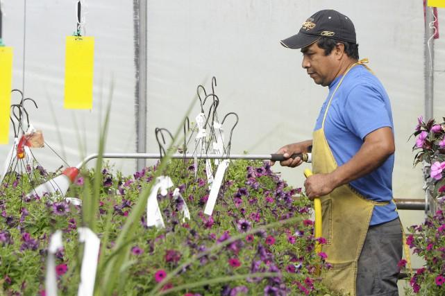 Les travailleurs étrangers temporaires demeurent indispensables au fonctionnement... (Le Quotidien)