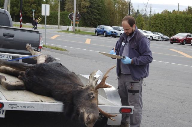 Le responsable de la grande faune en Estrie,... (Photo fournie, ministère des Forêts, de la Faune et des Parcs)