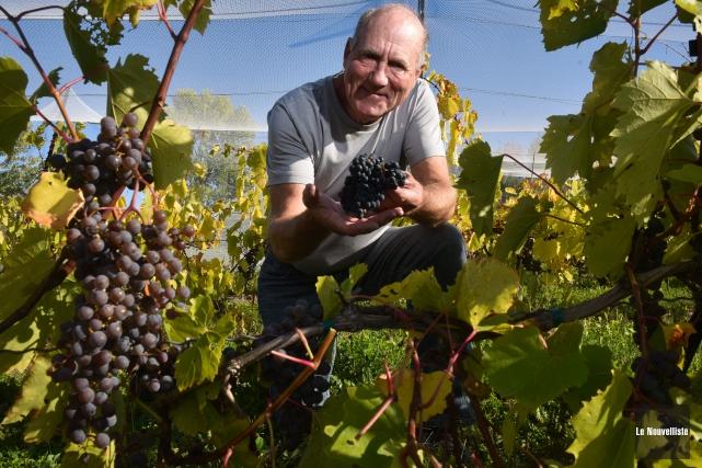 Daniel Harrisson, propriétaire du vignoble Domaine du Clos... (François Gervais, Le Nouvelliste)