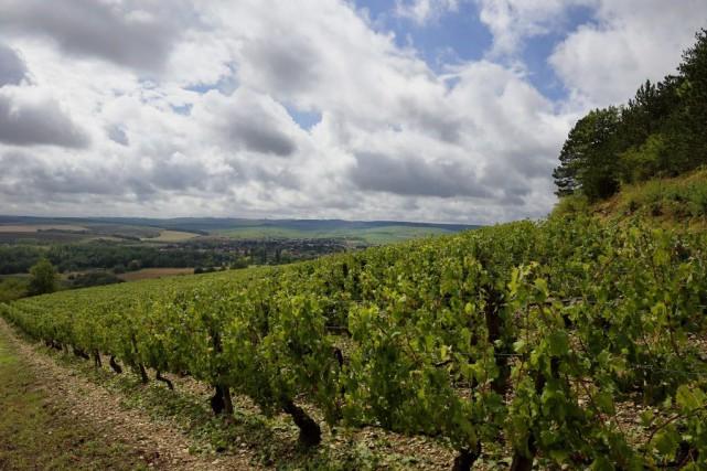La Bourgogne a connu de fortes gelées au... (PHOTO ERIC FEFERBERG, ARCHIVES AFP)