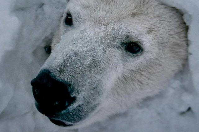 L'ours confère au long métrage un aspect magique.... (Fournie par Les films Séville)
