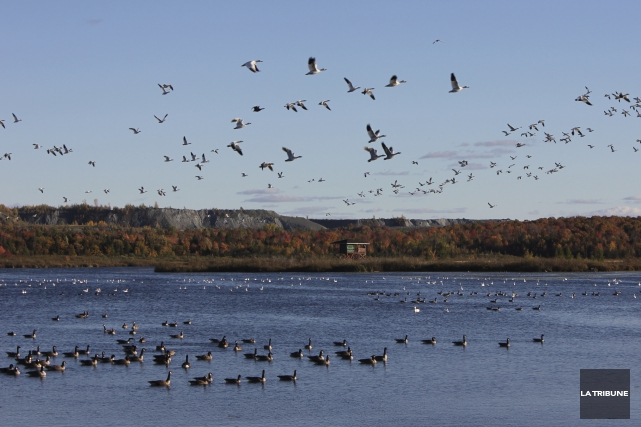 La 14e édition de laFête des oiseaux migrateurs... (La Tribune, Yvan Provencher)