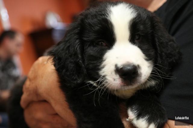 Un petit chien MIRA.... (Julie Catudal, La Voix de l'Est)