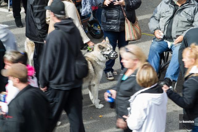 Le port de la muselière pour les chiens... (Olivier Croteau, Le Nouvelliste)