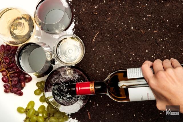 La vague du vin bio est loin de retomber. Partout, des vignerons délaissent... (PHOTO HUGO-SÉBASTIEN AUBERT, LA PRESSE)