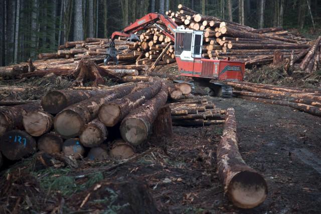 Les producteurs forestiers de l'Estrie, qui exploitent majoritairement... (La Presse Canadienne)