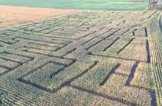 Le plus grand labyrinthe de maïs au Canada... (Fournie par le Festival Halloween La Pocatière)